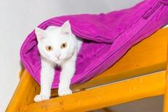White cat hiding Stock Image
