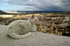 White cat. On a hill in Cappadocia Royalty Free Stock Photo