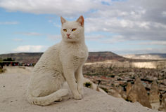 White cat. On a hill in Cappadocia Royalty Free Stock Photography