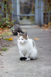 White cat. Homeless white cat on the street Royalty Free Stock Photos