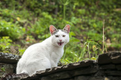 White cat on house roof Royalty Free Stock Photos