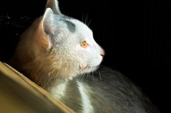 The cat is illuminated in the darkness. The white cat is illuminated in the darkness royalty free stock photo