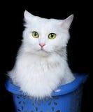 White cat isolated on white background Stock Photo