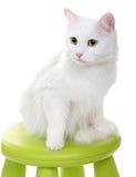 White cat isolated on white background Stock Image