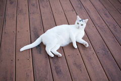 White cat laydown on the old red deck. White kitty cat laying down on the old red deck, relaxing cat Royalty Free Stock Photos