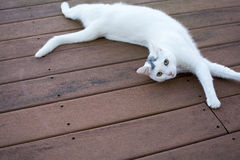 White cat laydown on the old red deck Stock Photo