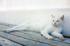 White cat laying down Royalty Free Stock Photography