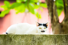 White cat lie down on fence Royalty Free Stock Photography
