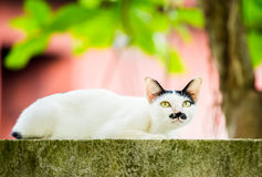 White cat lie down on fence Stock Photography