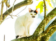White cat lie down on tree Royalty Free Stock Photography