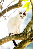 White cat lie down on tree Royalty Free Stock Images