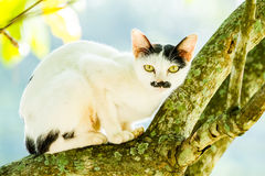 White cat lie down on tree Royalty Free Stock Photo