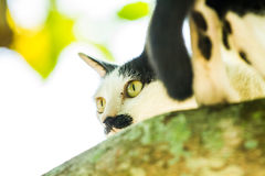 White cat lie down on tree Royalty Free Stock Photos