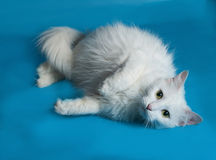 White cat liyng on blue. Background Royalty Free Stock Photo