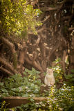 White cat. Lone white cat in the forest Royalty Free Stock Photography