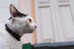 White cat looking Royalty Free Stock Image