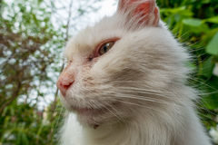 White cat looking. To the side Stock Image