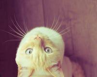 White cat looks stock photos