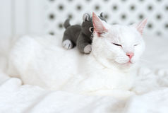 White cat lying on the bed. Stock Photo