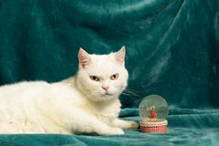 White cat lying on blanket next to a crystal snowball. Stock Photography