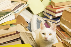 White cat lying in a bunch of books. Selective focus. Stock Photo