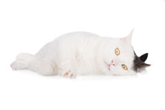 White cat lying down Royalty Free Stock Photos