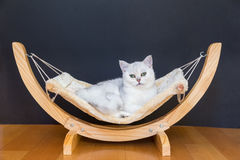 White Cat Lying Lazy In Hammock Royalty Free Stock Images