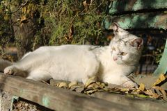 White stray cat on an old park bench stock image