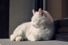 White cat lying at the window. Cat lying at the window Stock Photos