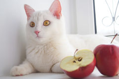 White cat stock images