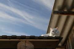 White cat with multi-colored eyes quietly sits on the roof of the canopy on the right and looks from above. Against the stock photos