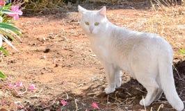 White cat Stock Photos