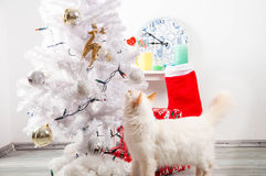 White cat near the christmas tree. White cat near the decorated christmas tree Royalty Free Stock Images
