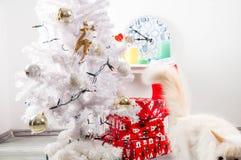 White cat near the christmas tree Royalty Free Stock Image