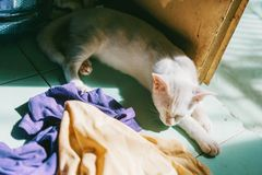 White Cat Near Door and Assorted Textiles Royalty Free Stock Image