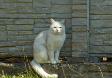White cat near the fence Stock Photos