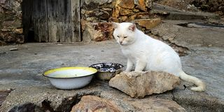 Free White Cat On A Dirty Street Stock Photos - 136003713