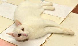 White cat. With orange eyes stock photo