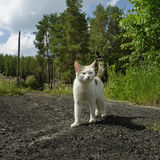 White cat outdoor Stock Photo
