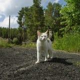 White cat outdoor Stock Photo