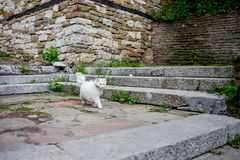 White cat in outdoor scene stock photography