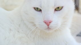 A White Cat Outside. My neighbours cat outside my house Stock Images