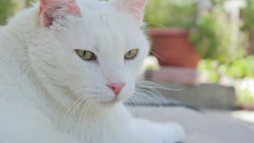 A White Cat Outside. Photo of the cat looking away from the lens with a blurry background of plants Royalty Free Stock Photos