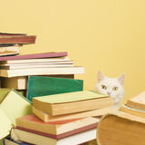 White cat peeking behind a pile of books. Selective focus. Stock Images