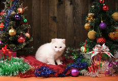 White cat playing next  Christmas tree Stock Images