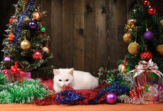White cat playing next to  Christmas tree Royalty Free Stock Images