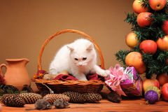 White cat playing with a plush mice Royalty Free Stock Images