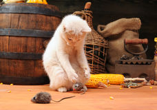 White cat playing Stock Images