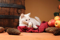 White cat playing with a plush mouse Royalty Free Stock Photos