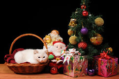 White cat playing with a Santa Claus Stock Images